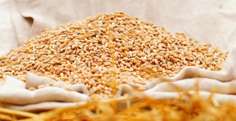«Семейный подряд»: в Доманевском районе шайка родственников украла 140 кг пшеницы