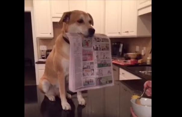 Услужливый пес  восхищает пользователей Интернета