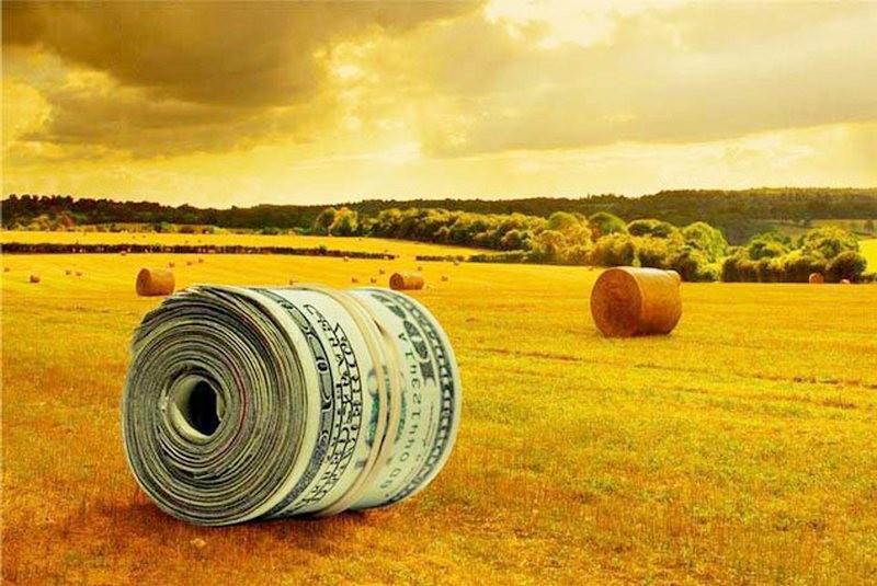 Агросектор в 2017 году может получить 5 млрд.грн. поддержки из государственного бюджета