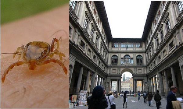Голуби-диверсанты: самый известный итальянский музей атаковали клещи. Два человека госпитализированы