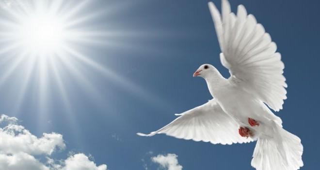 Власти Индии отпустили «голубя-шпиона» из Пакистана домой