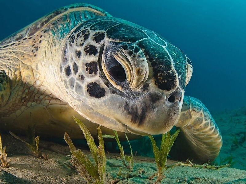Заболевшую морскую черепаху лечат в барокамере, чтобы вернуть плавучесть