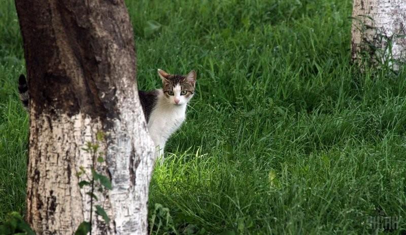 Кандидат в мэры Рима пообещал завезти в город полмиллиона кошек из Азии – уничтожать крыс