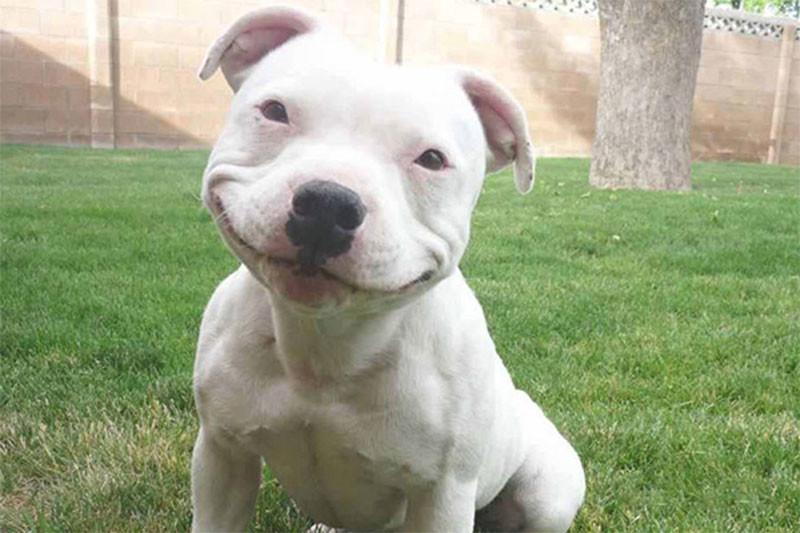 Ученые выяснили, какие собаки самые агрессивные: неожиданный результат