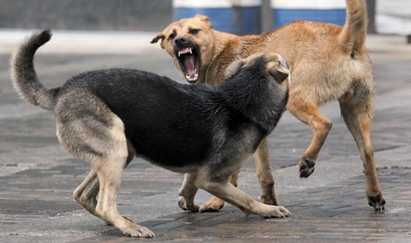 Каждый пятый николаевец подвергался нападению бродячих собак, но горожане хотят, чтобы власть решила эту проблему гуманно