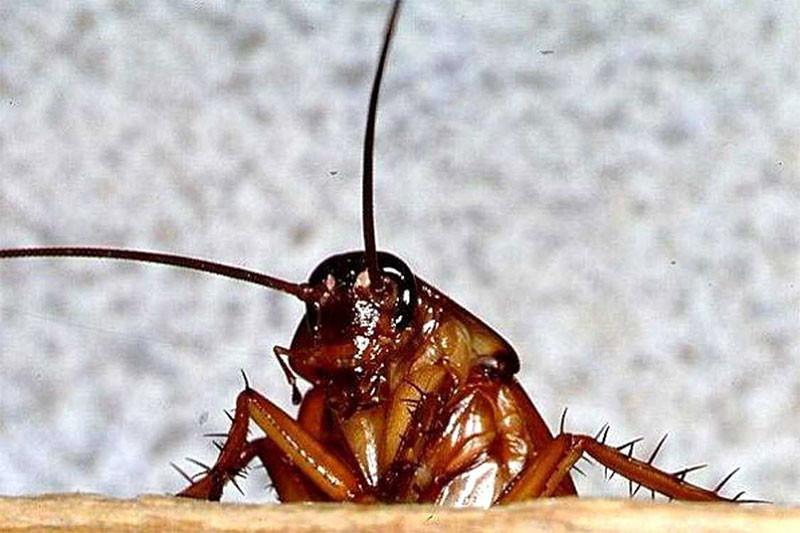 Проснулся от боли и щекотки: в Тернополе таракан заполз в ухо подростка