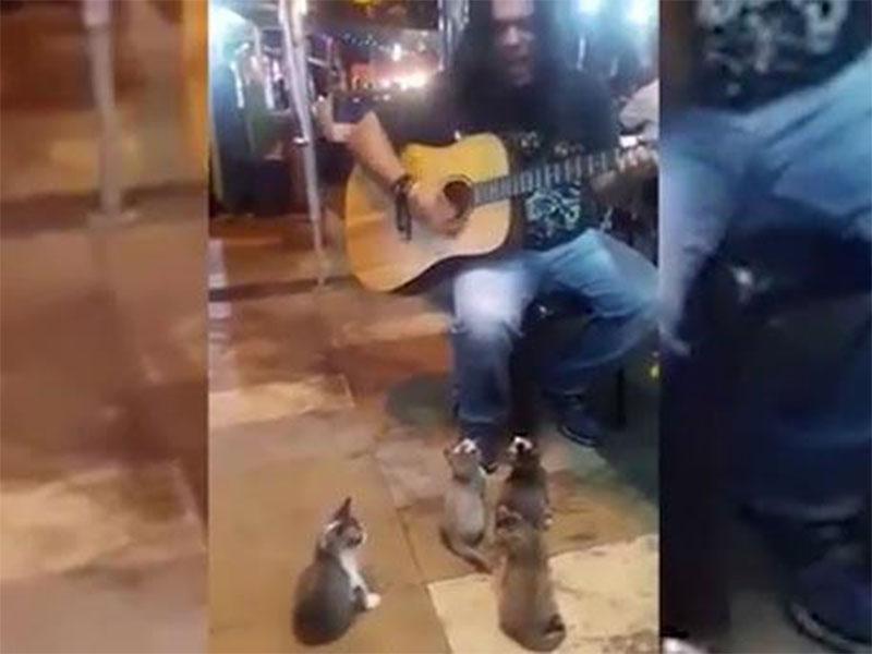 Пушистые меломаны: четыре котенка заслушались игрой уличного музыканта