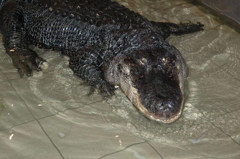 В Николаевском зоопарке – именитый именинник, который «помнит» многое
