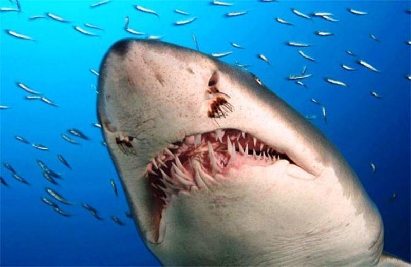 На курорте в Египте на украинцев напали акулы: ребенок в реанимации