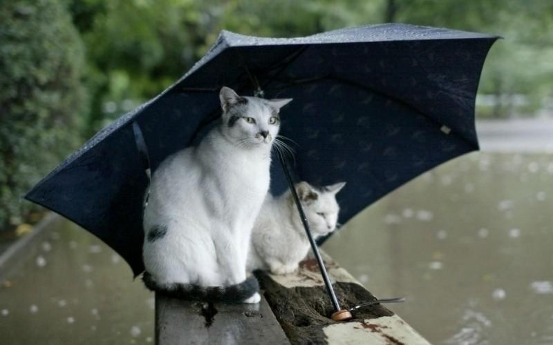 Спасатели предупреждают об ухудшении погоды. Николаевскую область завтра накроют сильные дожди с ветром