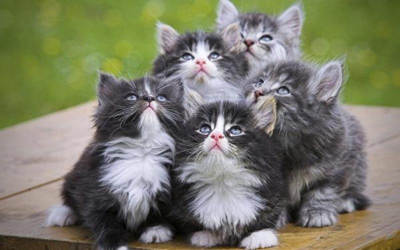 """В Нью-Йорке выпустили духи с запахом котенка. Одеколон """"Земляной червяк"""" у них уже есть"""