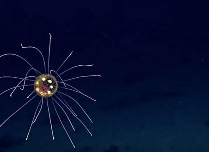Фантастическое существо обнаружено на глубине 3 700 метров