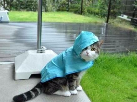 Погода на завтра: в Украине местами дожди, температура до +28