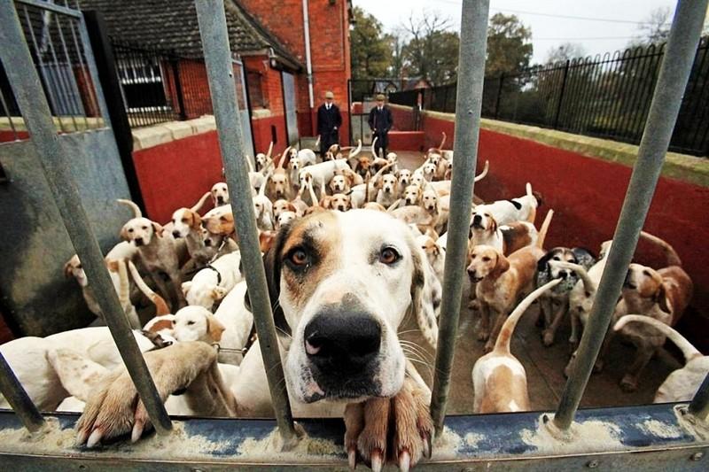 Ради свободы даже собака способна на многое