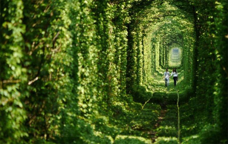 Украинский «Тоннель любви» возглавил ТОП-10 наиболее романтических уголков планеты