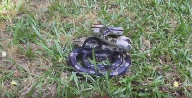 Не стоит надоедать животным: змея украла телефон у навязчивой туристки