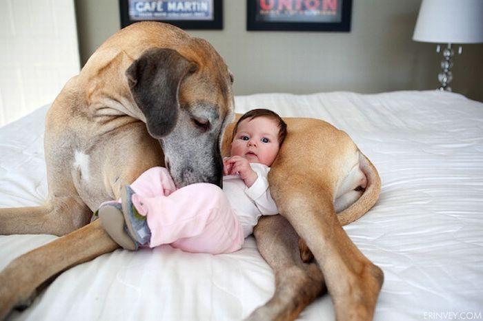 Друг и охранник. Собаки защищают младенцев даже от родителей