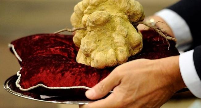 Житель Киевской области нашел гриб стоимостью 19 тыс.грн.
