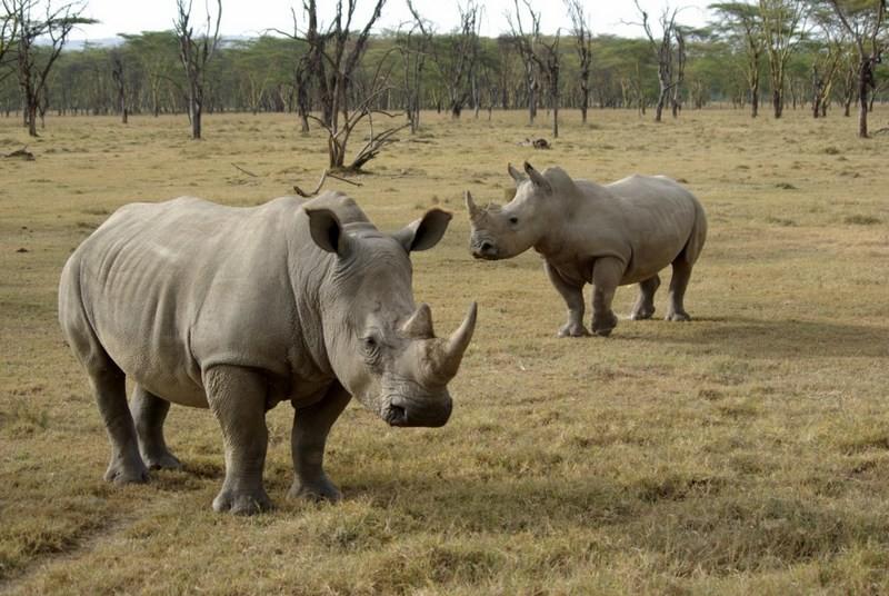 В зоопарке Флориды носорог ранил двухлетнего ребенка