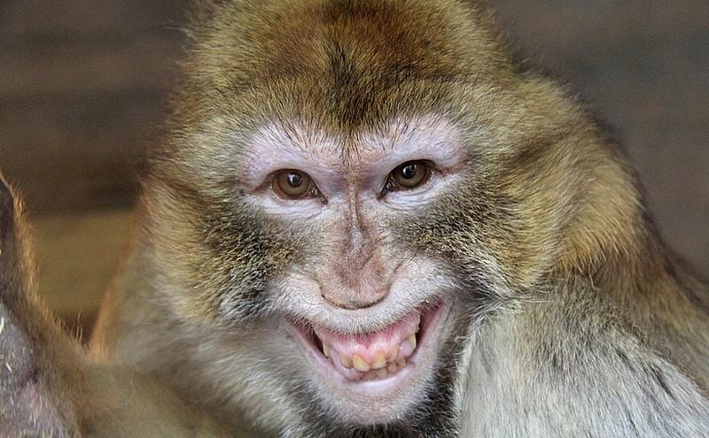 В ТРЦ Харькова ловили обезьяну (ВИДЕО)