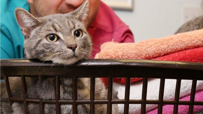В Великобритании в стиральной машине случайно постирали кота-подростка – Бобби выжил