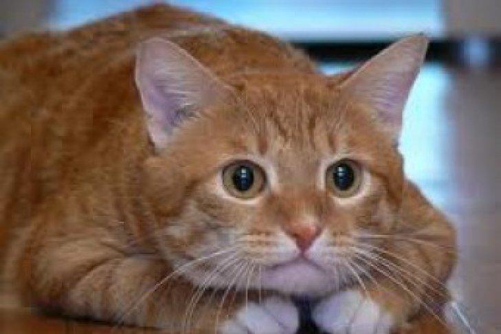Кошка пытается спасти хозяйку из ванной