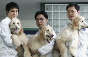 В Южной Корее активно клонируют собак. Из лучших побуждений