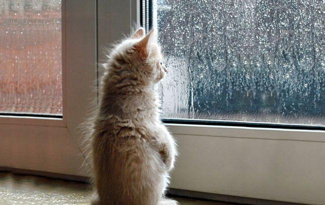 Погода на завтра: в Украине дожди, температура до +29