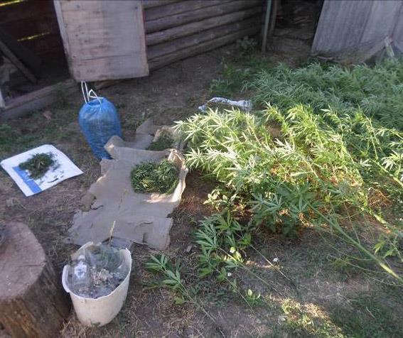 В Снигиревском районе полицейские отобрали у селянина 1,2 кг травы и еще 15 кустов