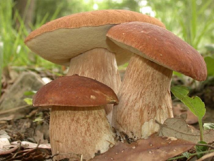 Сбор грибов в Херсонской области теперь будет платным. Но не для всех