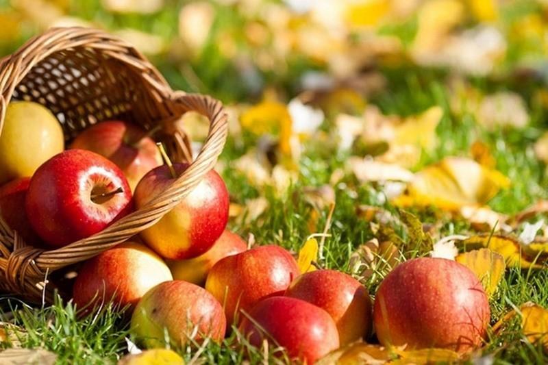 Время запасаться. В Украине рекордно подешевели яблоки