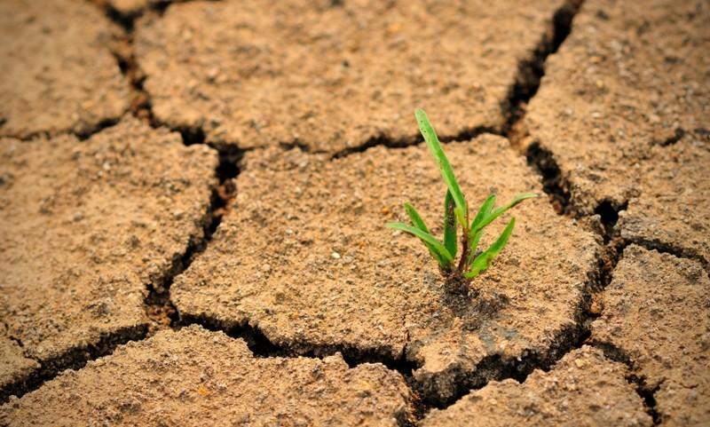 Только в одном штате Индии  совершили самоубийство из-за засухи 580 фермеров