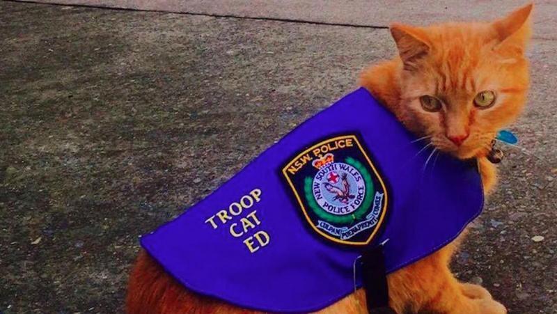 И форма есть: в Австралии кот теперь работает в полиции