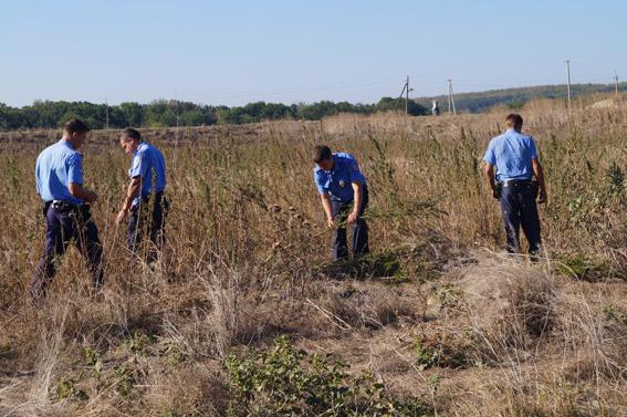 В Николаевской области обнаружили поле конопли – 900 кустов
