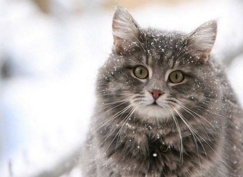 Парень не пожалел времени и денег, чтобы провезти своего толстого кота в салоне самолета (ФОТО)