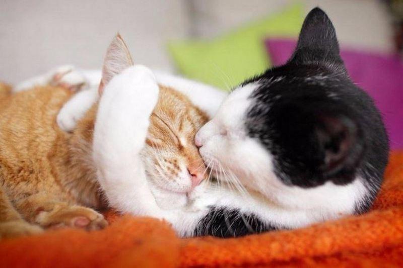 И больше никакой аллергии на кошек: разработана чудо-вакцина (ИНФОГРАФИКА)