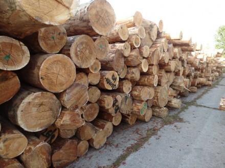 Канал незаконного экспорта вырубленного леса разоблачили в Одесской области