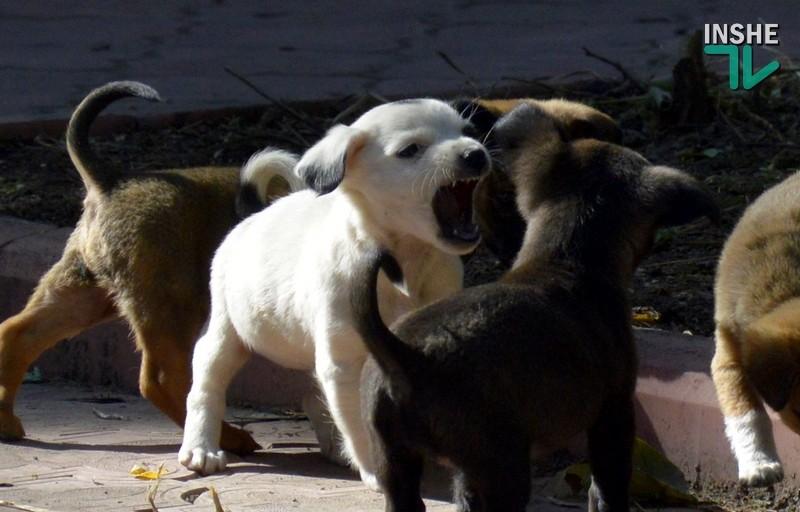 """""""Не все так просто, как кажется"""": в горсовете представили результаты опроса отношения николаевцев к проблеме бездомных животных"""