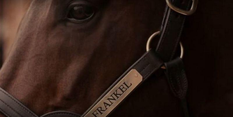 Самый дорогой в мире конь подорожал вдвое