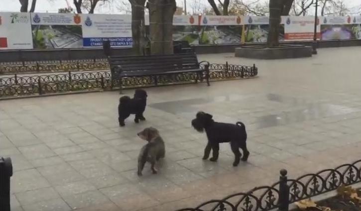 «Одесса, мой город родной!»: гимн Южной Пальмиры спели собаки