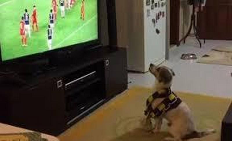 Он действительно смотрит футбол и «болеет»: у «Фенербахче» есть четвероногий фанат