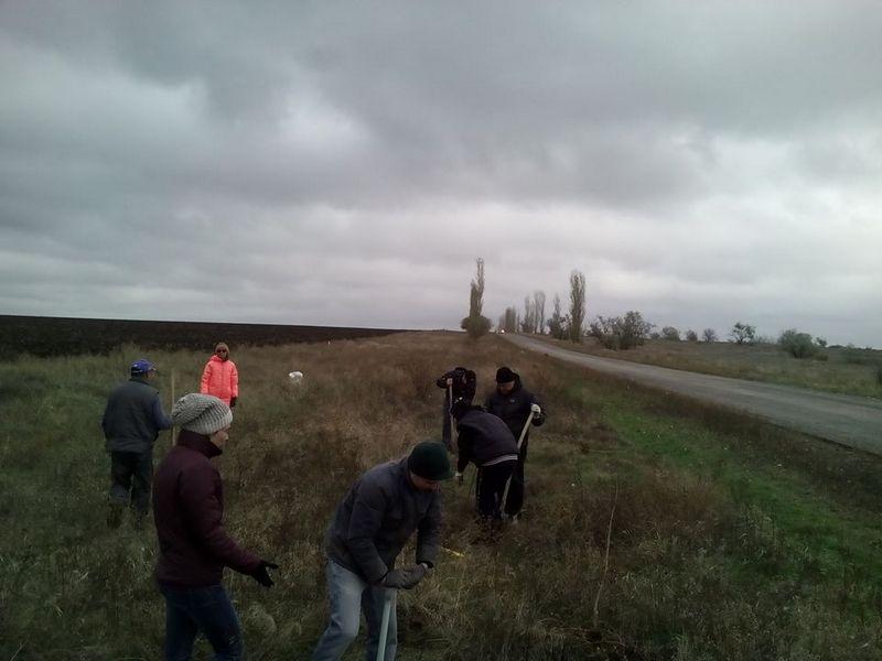 Чтобы дорогу на Матвеевку не заметало зимой: неравнодушные николаевцы высадили 60 саженцев