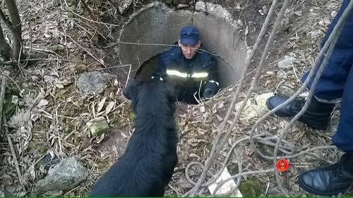 В Ровенской области собака просидела двое суток в двухметровом колодце