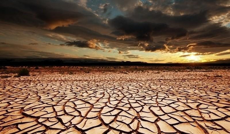 Растения замедляют глобальное потепление, – учёные