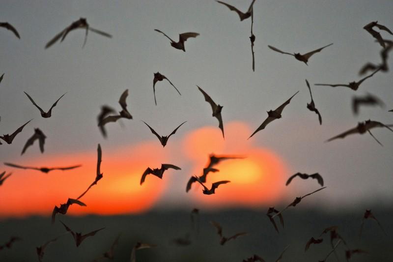 Рекорд скорости полета в животном мире побит