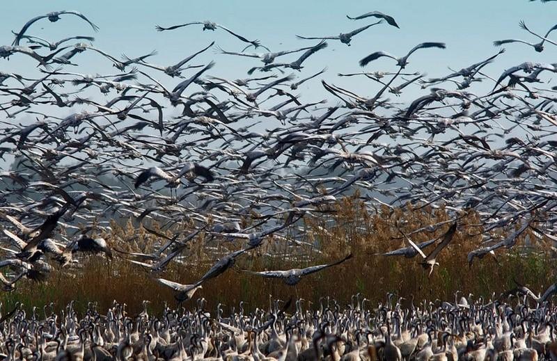 В Очаковском районе Николаевщины выявлен птичий грипп