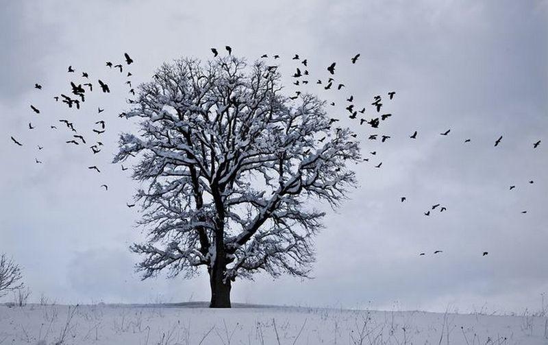 Завтра и послезавтра большую часть Украины накроет снегом, а в Николаевской области осадков не ожидают