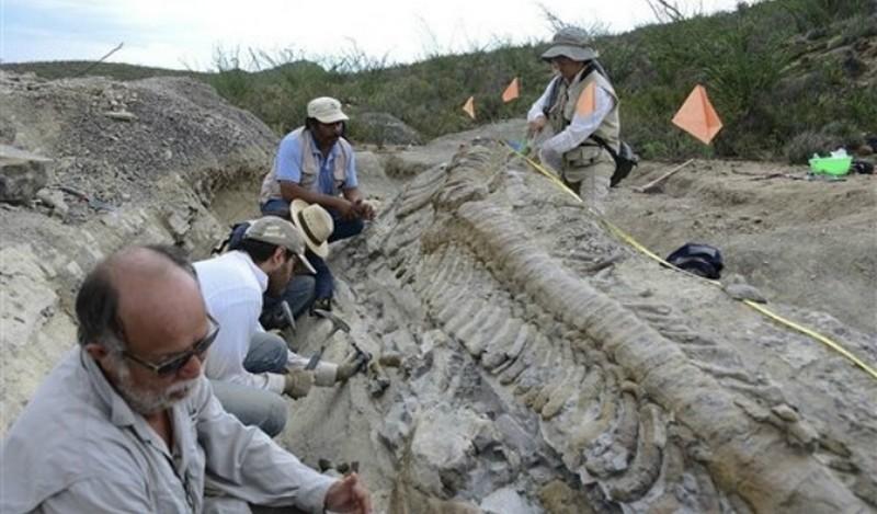 Палеонтологи раскопали в Австралии неизвестного ранее динозавра