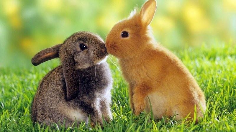 Еще раз о вреде фейерверков: в Китае мужчина заплатит 65 тыс.долларов за гибель 11 тысяч перепуганных кролей