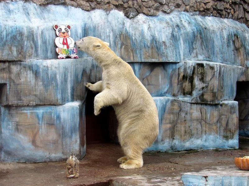 В Николаевском зоопарке отметили день рождения Нанука